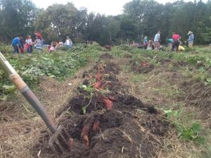 harvest row